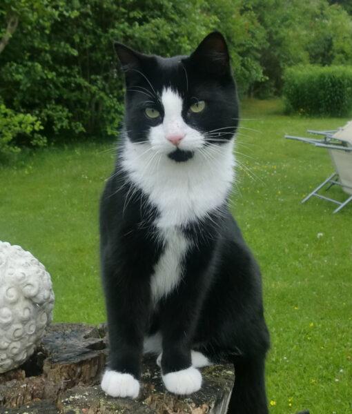 cat_ludvig