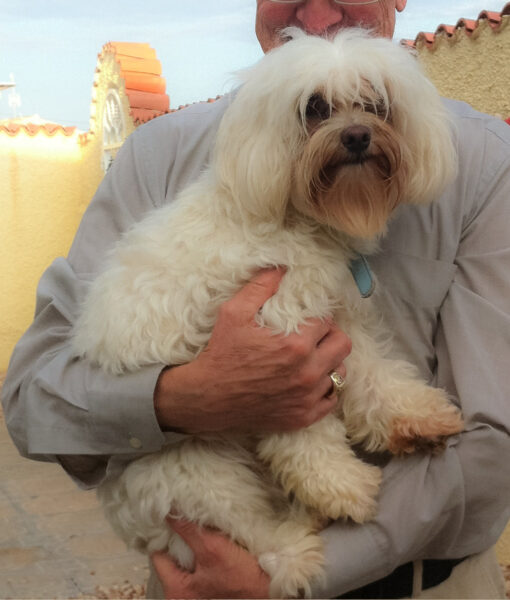 dog_cooper