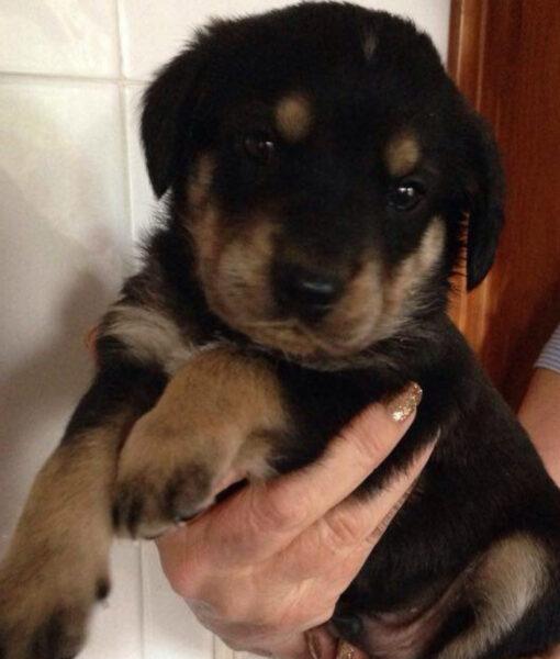 puppy_jet