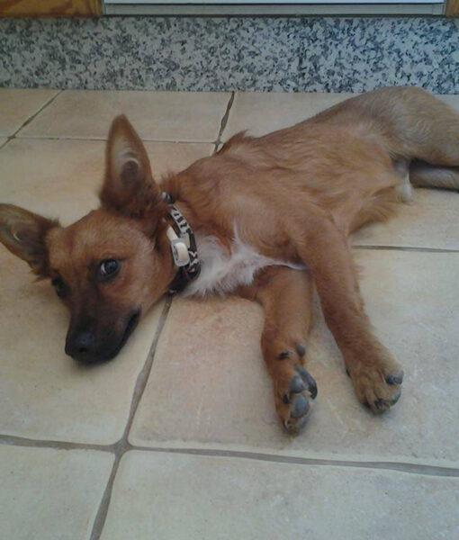 puppy_teo