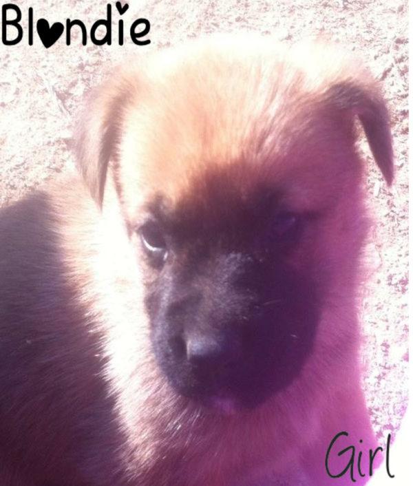 puppy_blondie