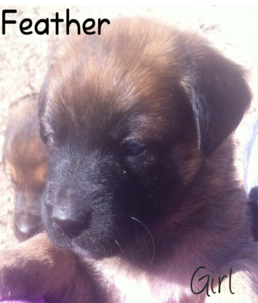 puppy_feather