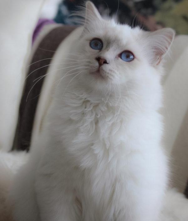 cat_sotai