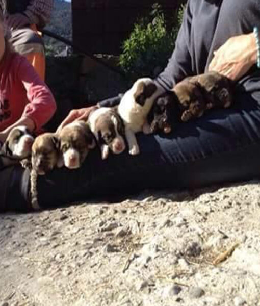 puppy_9pups