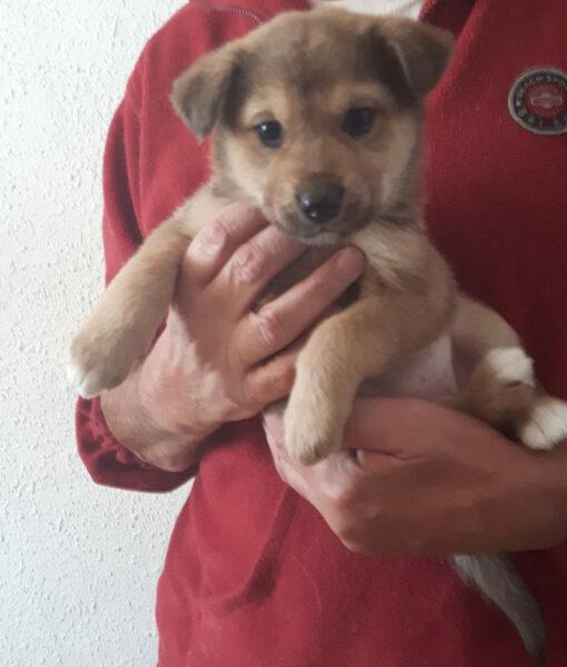 puppy_girl