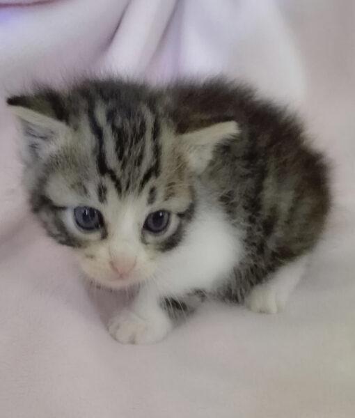 kitten_tiny_kitten