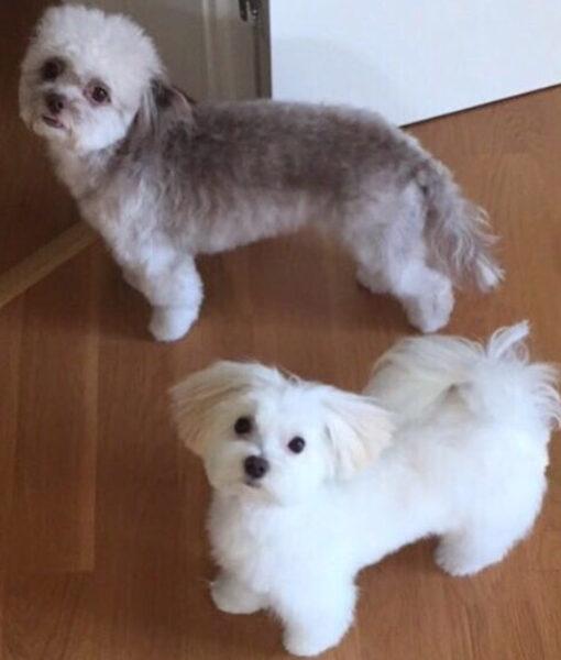 dog_panda_frosty
