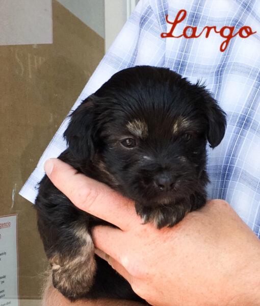 puppy_largo