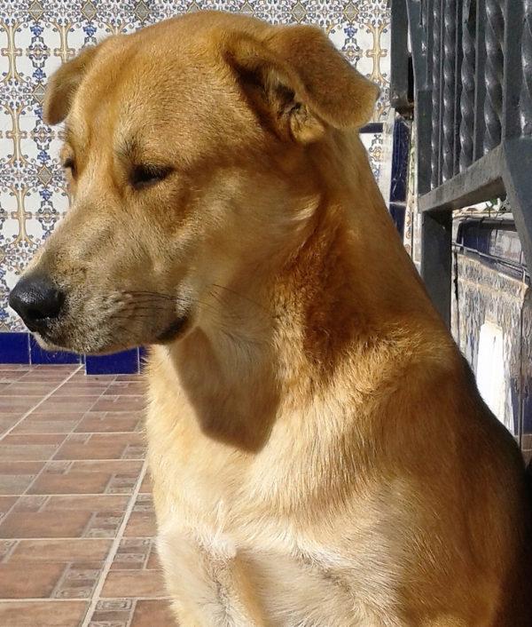 dog_chole_2