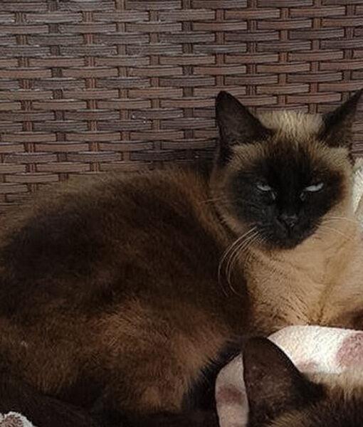 cat_safie