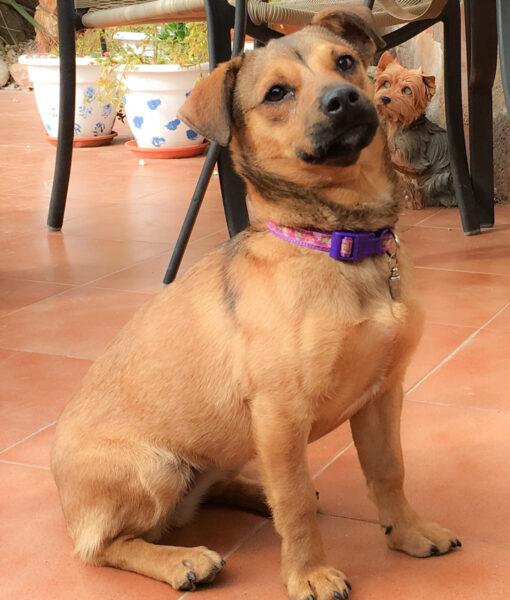 puppy_tara_4