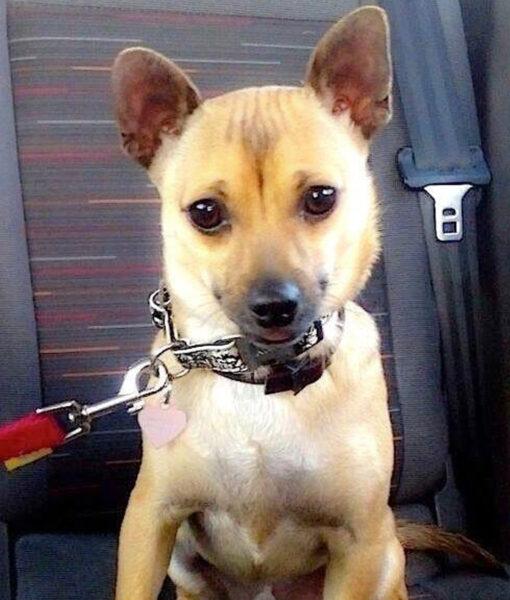 puppy_lucas