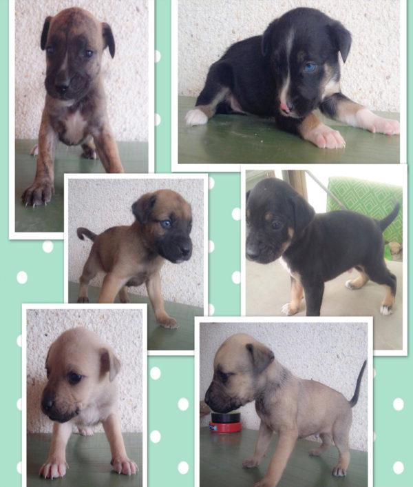 puppy_puppies_6