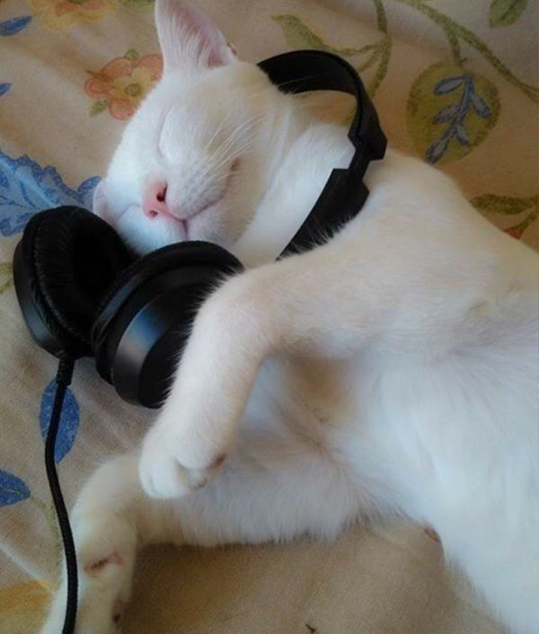 cat_nobby