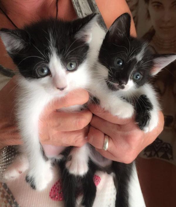 kitten_frodo_bilbo