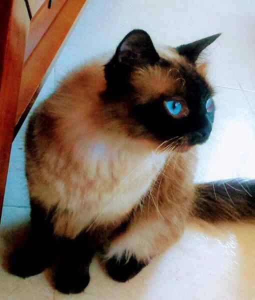 cat_jazzy