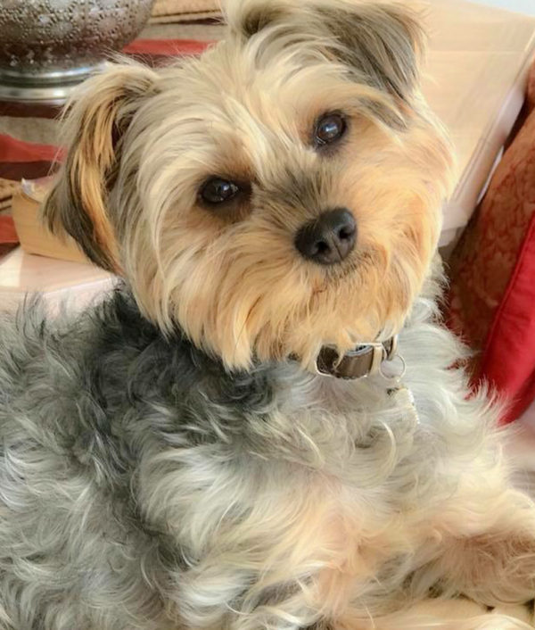 dog_bella_4