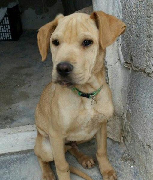 puppy_lucky_2