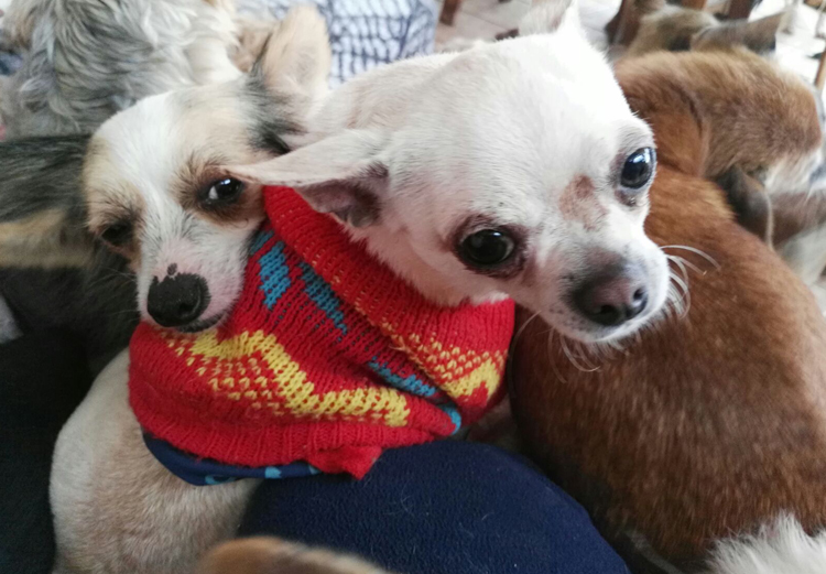 pets in spain, pets spain, dogs spain, cats spain, animals spain, cat rescue, dog rescue, animal rescue, cat rehoming, dog rehoming, animal rehoming, animal charity, dog charity, cat charity, pet charity, pet rehoming, pet rescue, la marina spain, alicante spain, spain
