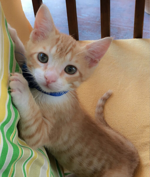 kitten_mikey_2