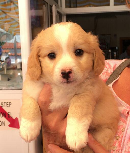 puppy_bounty