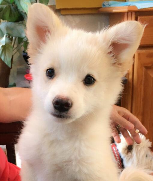 puppy_candy_3