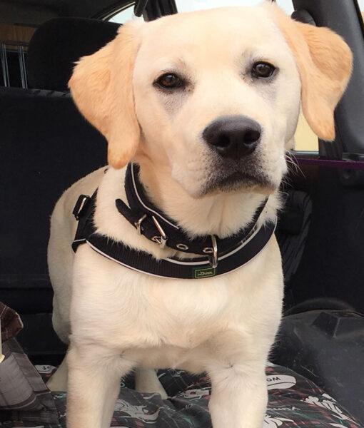 puppy_sam