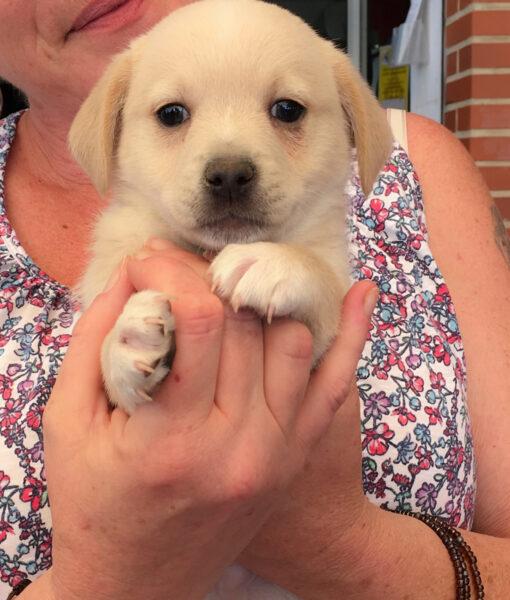 puppy_wispa
