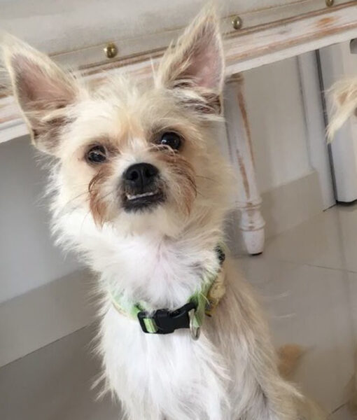 puppy_fino