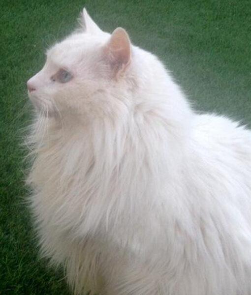 cat_sebastian-02
