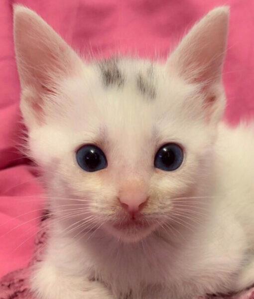 kitten_ant
