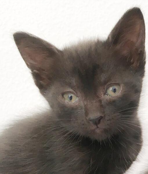 kitten_brandy
