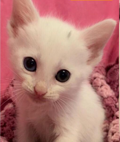 kitten_jerry