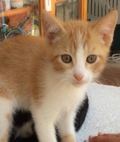 kitten_bertie