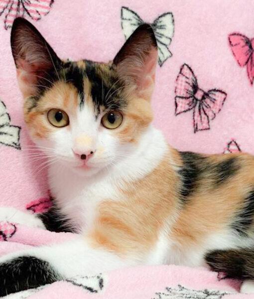 kitten-amber