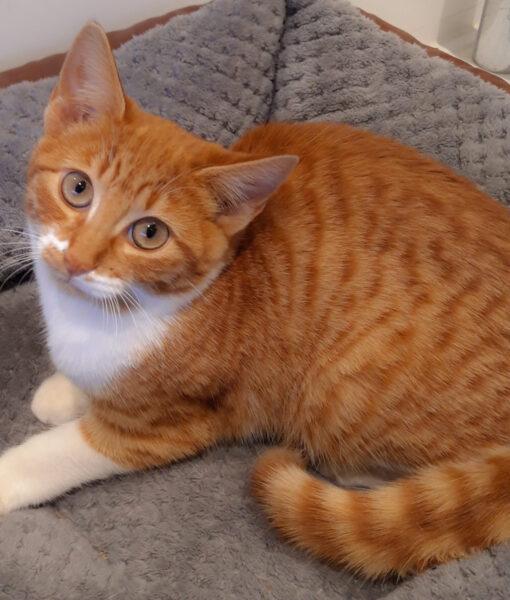 kitten_amber-1