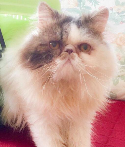 cat_coco