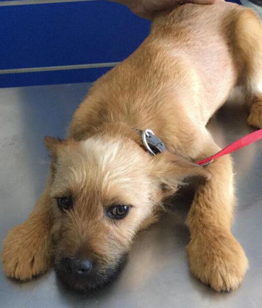 puppy_teddy-2