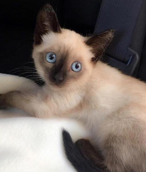 kitten_willow-2