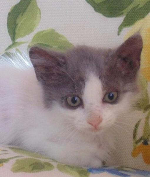 kitten_polly