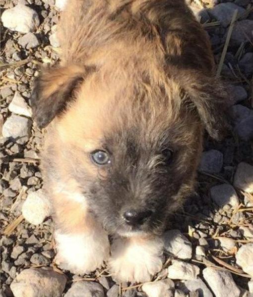 puppy_clara
