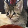 Kitten_jenny