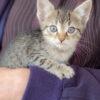 Kitten_jessie