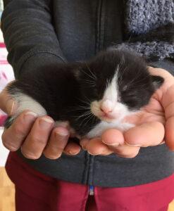 Kitten_pixie