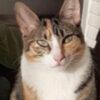 cat_gina