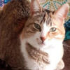 cat_raydita