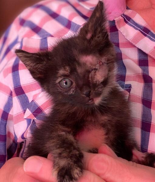 kitten_button